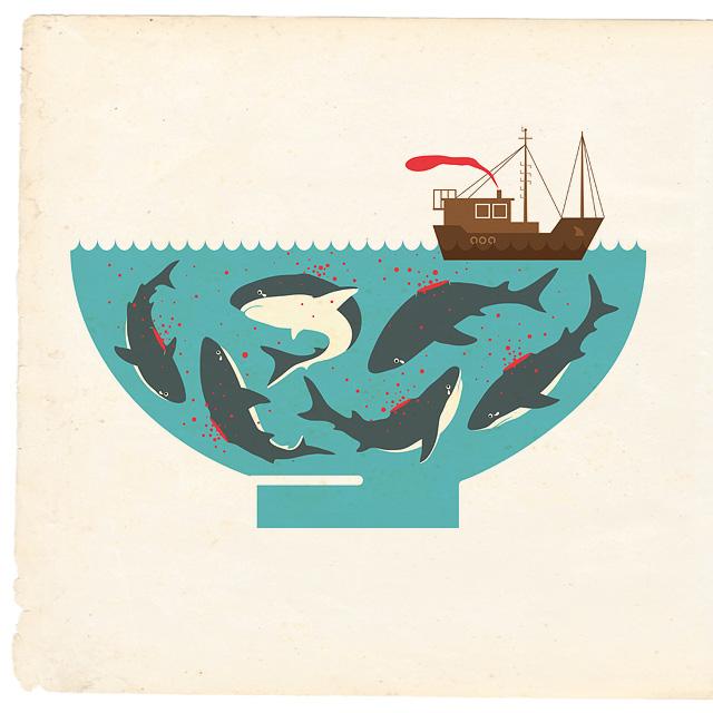 Shark fin poster